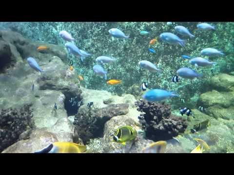 Amsterdam Aquarium 26.11.2015.