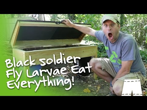 How To Operate A DIY Black Soldier Fly Larvae Composter