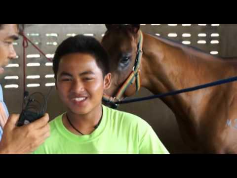 สติลแมนผู้ท้าชิงถ้วยยอดม้าแข่งแห่งประเทศไทยปี57