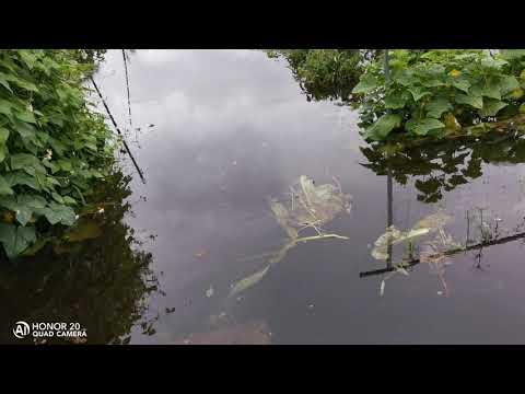 Наводнение г. БЕЛОГОРСК 31.07.2019г. Вода продолжает прибывать.