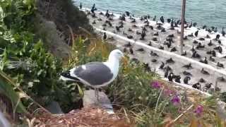 Must-see in California. Alcatraz Island. Birds
