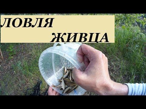 Ловля живца-Как ловить живца-Живец на щуку-Живец на хищника-Живец на налима-Ловля на подъемник