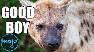 Top 10 Animals - Top 10 Misunderstood Animals