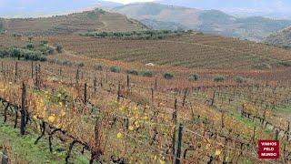 Região do Cima Corgo no Douro - Quinta de Santa Eugénia