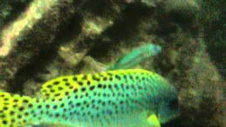 Aquarium متحف الاحياء المائيه 3 Thumbnail