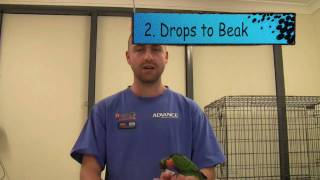 4 helpful tips on Worming your birds