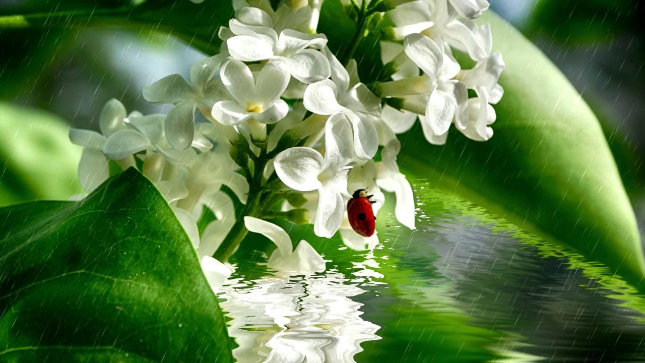 Beautiful delicate flowers in water in the rain