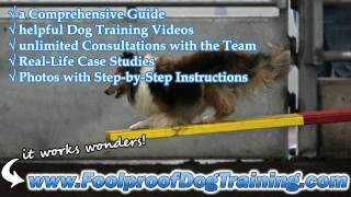 How To House Train A Puppy In 5 Days - Canine Training