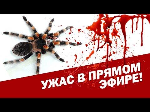 TEST.TV: В ПРЯМОМ ЭФИРЕ ТВ НАПАДЕНИЕ ГИГАНТСКОГО ПАУКА // Giant spider's attack. Live on TV