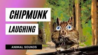 Chipmunk Laughing - Sound Effect - Animation
