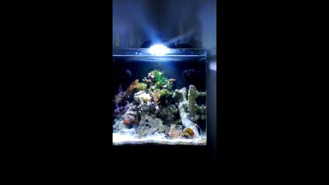 Aqua One Aquanano 40 Eco Aqua 30w 14000k Led Nano Marine Reef Tank Youtube