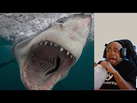 THE OCEAN IS WAY DEEPER THAN YOU THINK #8 (Only Watch If Your Scared Of Huge Underwater Monsters!!)