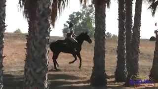 097XC Grace Netter JR Novice Cross Country Ram Tap Horse Trials Oct 2012