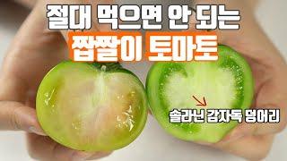 대저 짭짤이 토마토 먹으면 구토 설사 복통이 생기는 이…