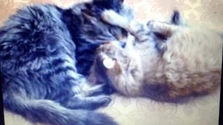 Котенок даром от рыжей кошки || Шебекино || Белгород