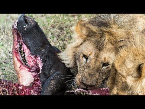Tanzania - Serengeti-Tarangire-Ngorongoro-Manyara Lake - i grandi parchi del nord