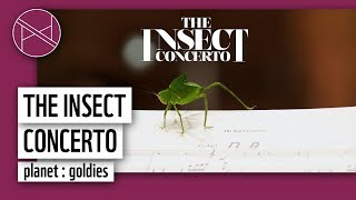 INSECT CONCERTO