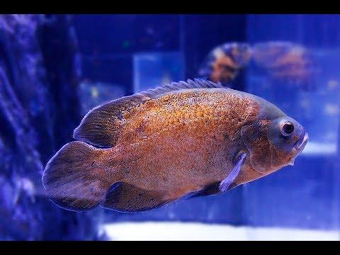 تفسير حلم رؤية صيد سمك أو سمكة في المنام لابن سيرين