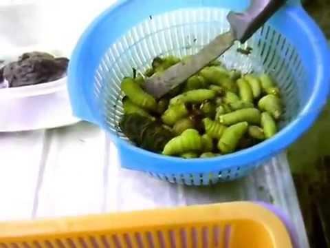 Exotic food....Butod or Sago worm