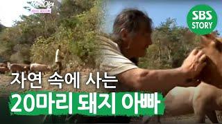 자연 속에 사는 20마리 돼지 아빠 I 순간포착 세상에 이런일이 (What on Earth!) | SBS Story