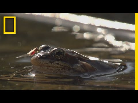 DJ Frosty - Frogs Come Alive After Winter Thaw