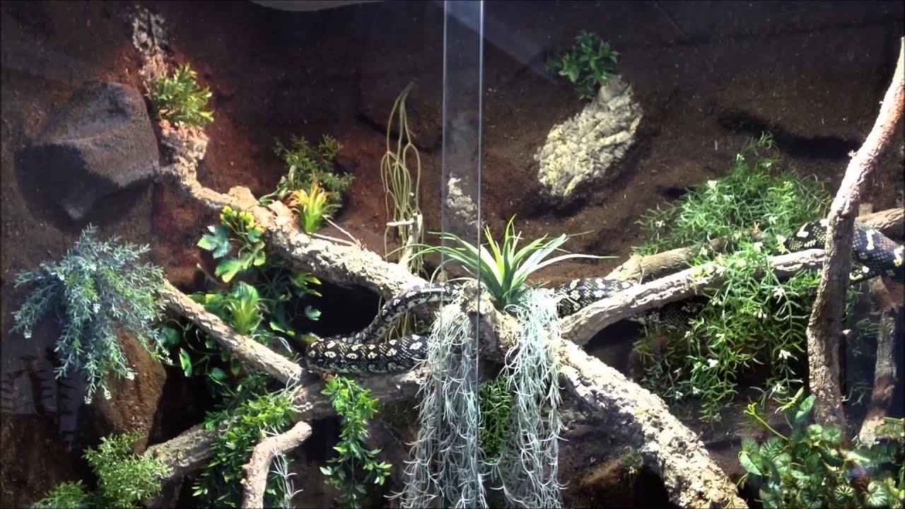 Regenwald Terrarium / Rainforest Tank with Diamond Python ...