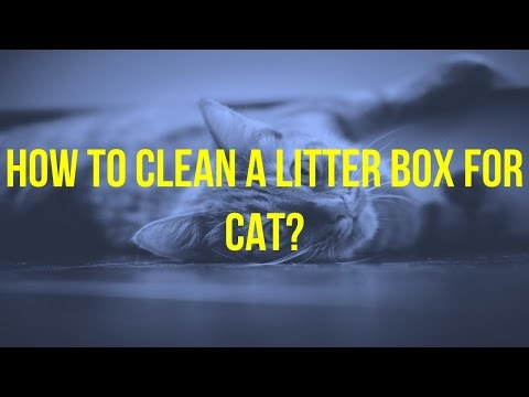 How to clean the cat litter box ?