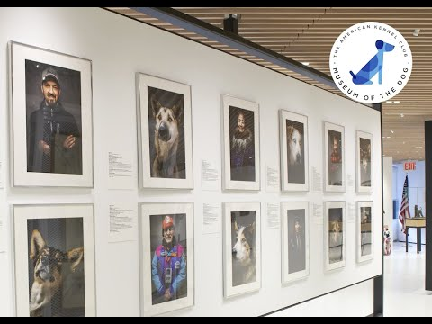 Museum of the Dog - Faces of Iditarod