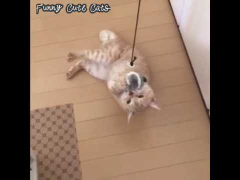 Cute Kittens Doing Funny Things 2020 #5 Cutest Cats