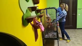 Выбор клетки для большого попугая серия 4: содержание большого попугая