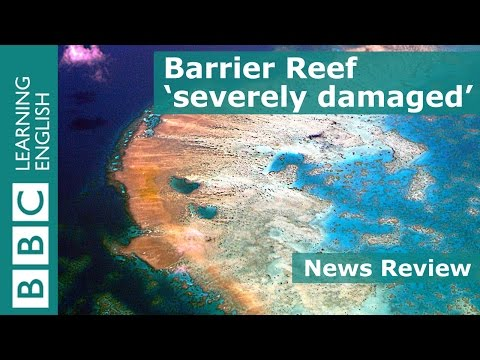 BBC News Review: Great Barrier Reef 'severely damaged'