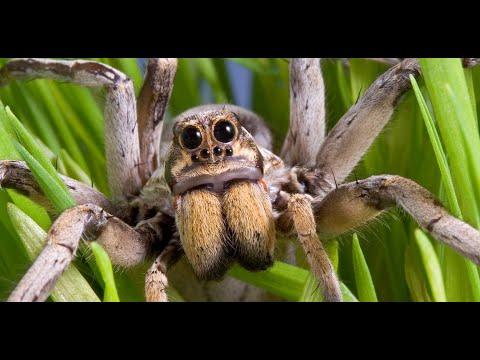 World's Worst Spider Bites; Brown Recluse
