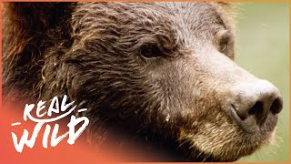 Austin Stevens Adventures - Grizzly Bear Stake Out [Documentary Series] | Wild Things