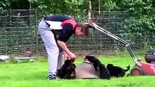 Rottweilerwelpen  Mit 5 Wochen