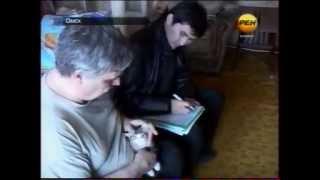 Судебные приставы в Омске отбирают котят в счёт погашения долгов за ком услуги