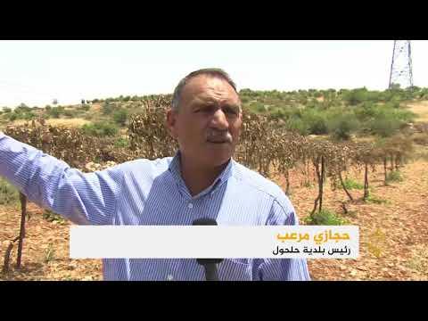 مستوطنون يقطعون بالمناشير مئات من أشجار العنب بالخليل  - نشر قبل 7 ساعة