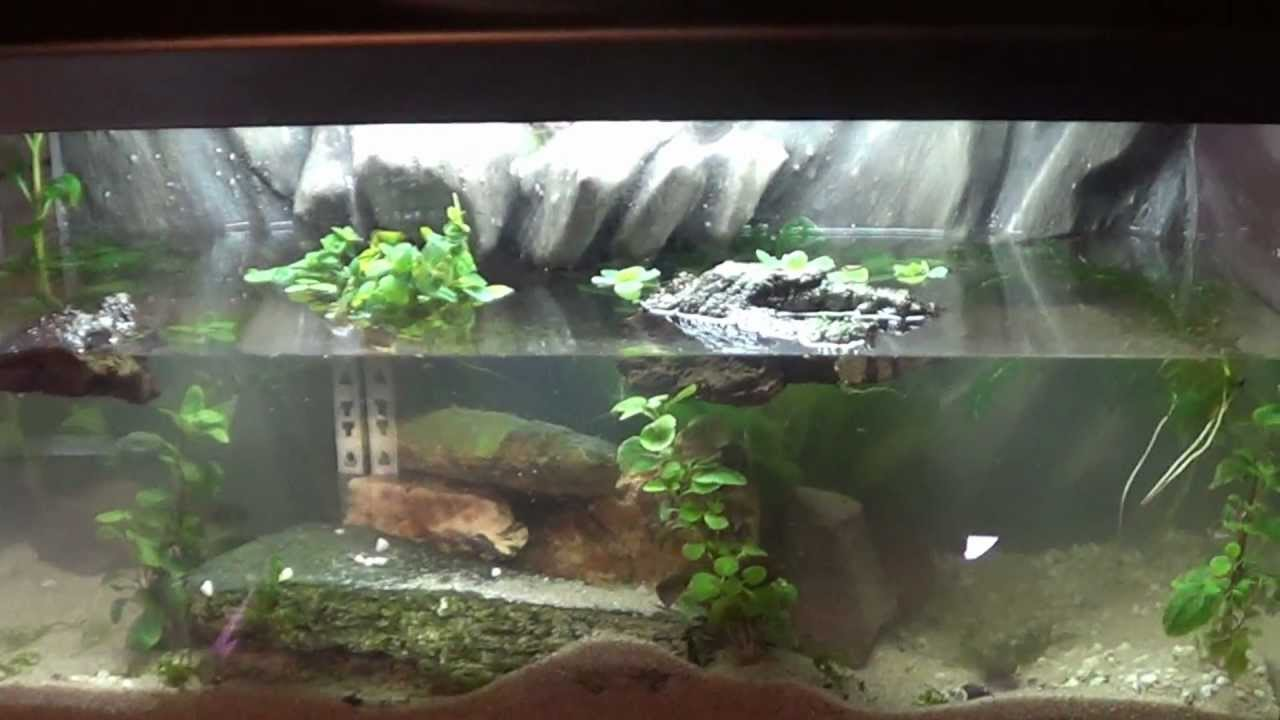 Fish tank in spanish - Just Finished Newt Tank