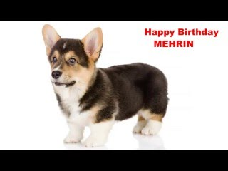 Mehrin  Dogs Perros - Happy Birthday