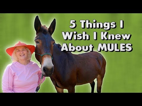 5 Things I Wish I Knew About MULES
