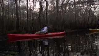 Paddling and Wildlife Watching in the Apalachicola WMA: EcoAdventures North Florida