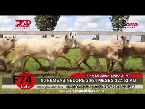 Lote F 74