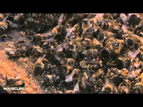 More Than Honey (Vise od meda) Film