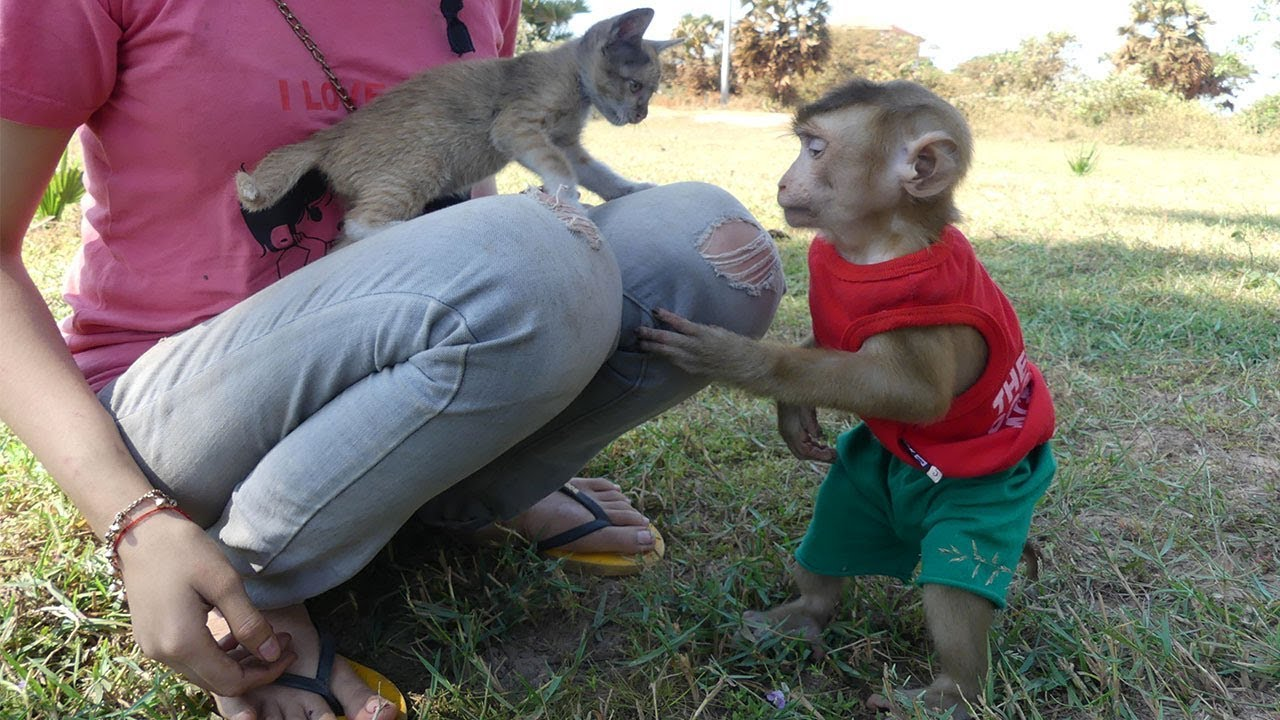Monkey Baby Dodo And Mom Rescue Abandoned Kitty Cat When Outside