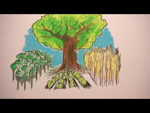 Plantando Águas: Sistemas Agroflorestais