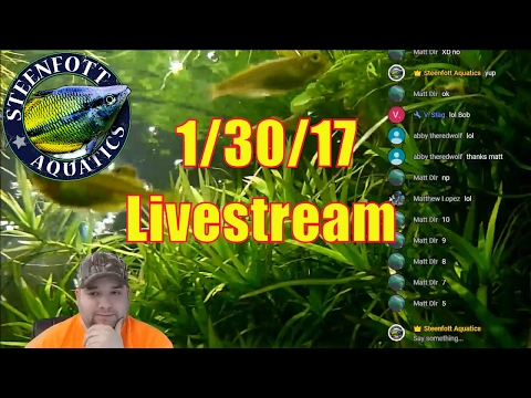 Aquarium Hangout - Livestream For Fish Enthusiast