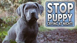 How To STOP Your Puppy Barking, Crying and Howling at Night!