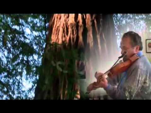 Violins & Cigars