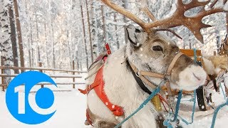 Places where you can actually visit reindeer