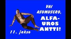 Vai asumusero, Alfauros Antti!