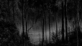 Rain At Midnight in The Forest - Deep Sleep - Stress Relief - Relaxation Study Tinnitus 🎧 6 Heures